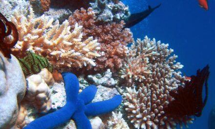 Costa Rica y República Dominicana intercambian experiencias sobre la conservación de arrecifes de coral