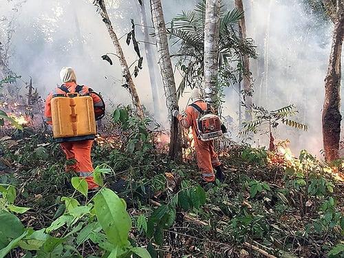 Ecologistas de EEUU acusan a Trump y Bolsonaro de «iniciar fuego» en Amazonía