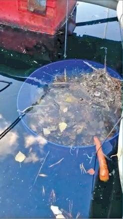 Joven desarrolla un invento para recoger sargazo en las playas