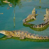Un hombre rescata a un niño que se ahogaba en un canal lleno de cocodrilos